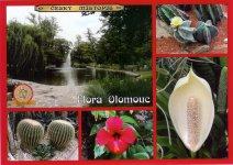 0266 - Flora Olomouc